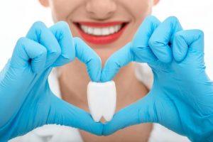 歯の模型を持つ女性歯科医