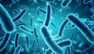 繁殖している細菌
