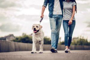 犬と散歩しているカップル