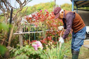 庭の植木をいじっているおじいちゃん