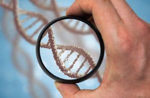 DNAをレンズ越しに観察する研究者