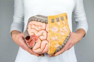 腸内の模型を手に持っている女性