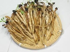 たんぽぽの根の写真