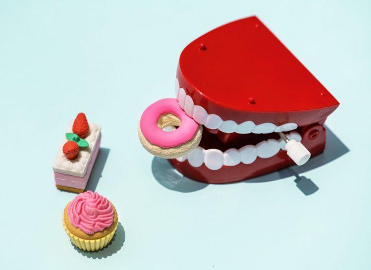 歯の模型とドーナッツ
