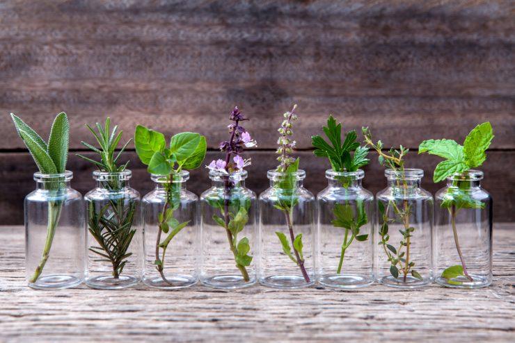 各種の植物